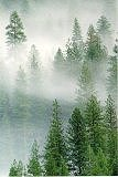 Forest in fog, Photograph Copyright by Brent VanFossen - Not for use without permission