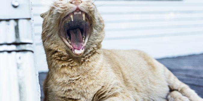 yawning-349753_1920